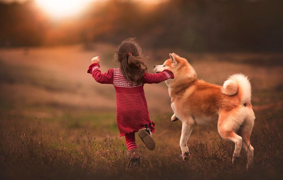 Короткие стихи про собаку для детей
